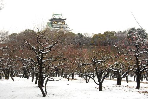 DSC大阪城雪と梅01