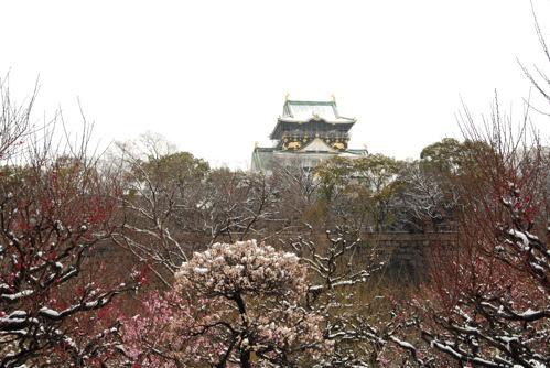DSC大阪城雪と梅04