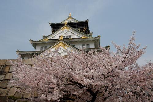 大阪城 桜01