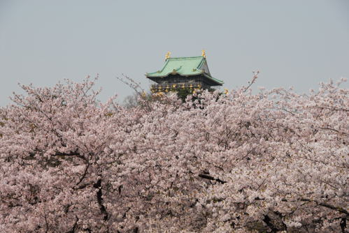 大阪城 桜02