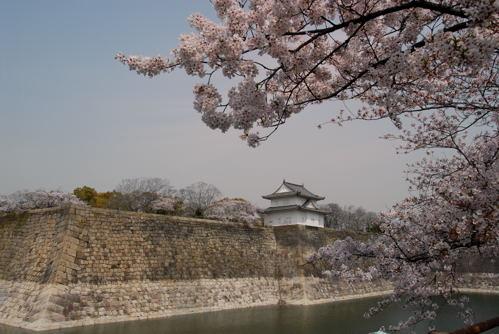 大阪城 桜03