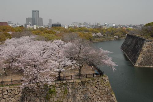 大阪城 桜05