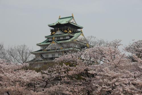 大阪城 桜06