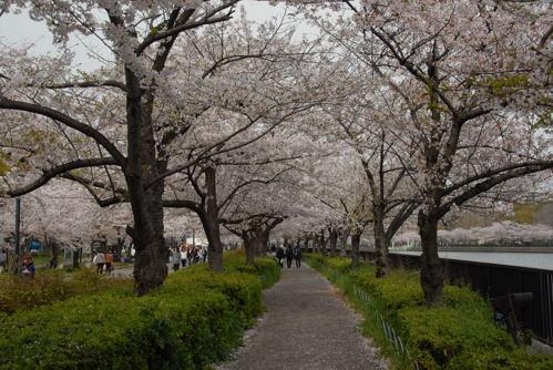 DSC桜ノ宮06
