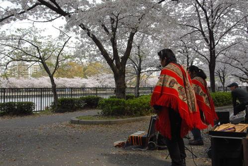 DSC桜ノ宮07
