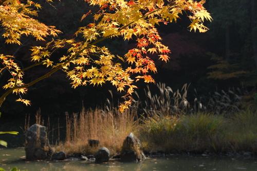 浄瑠璃寺004.jpg