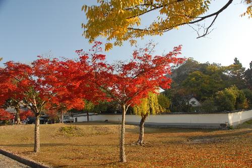 奈良公園001.jpg