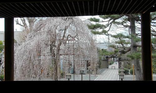 阿亀桜004.jpg