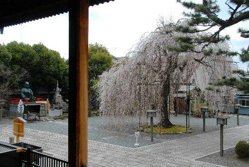 阿亀桜005.jpg