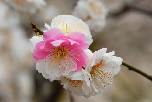 春日野01.jpg