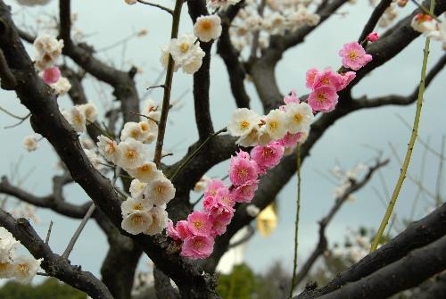 春日野02.jpg