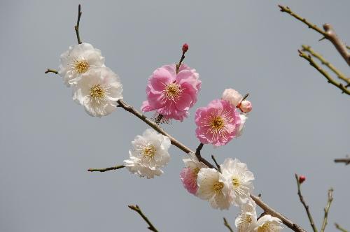 春日野03.jpg