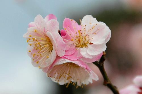 春日野04.jpg