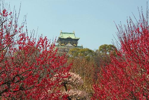 大阪城うめ01.jpg