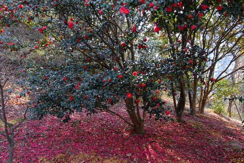 花の文化園004.jpg