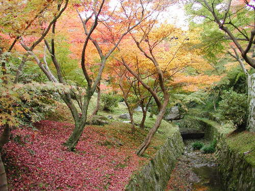 東福寺0003.jpg