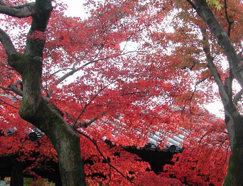 東福寺0006.jpg