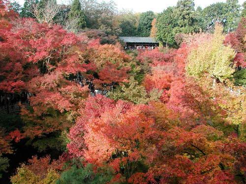 東福寺0004.jpg
