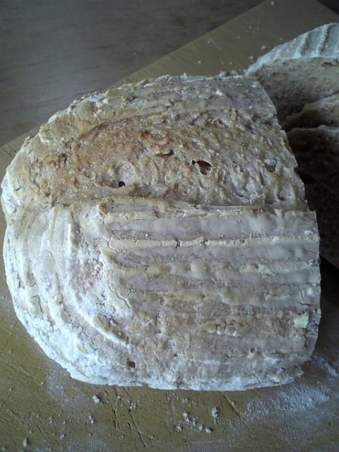 玄米酒粕酵母カンパ