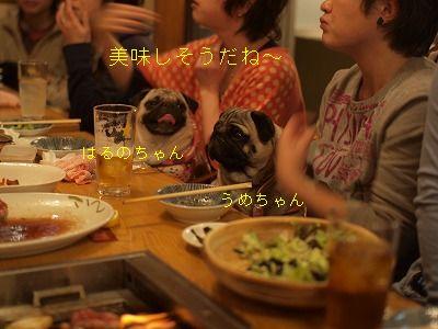 s-2011_01300070.jpg
