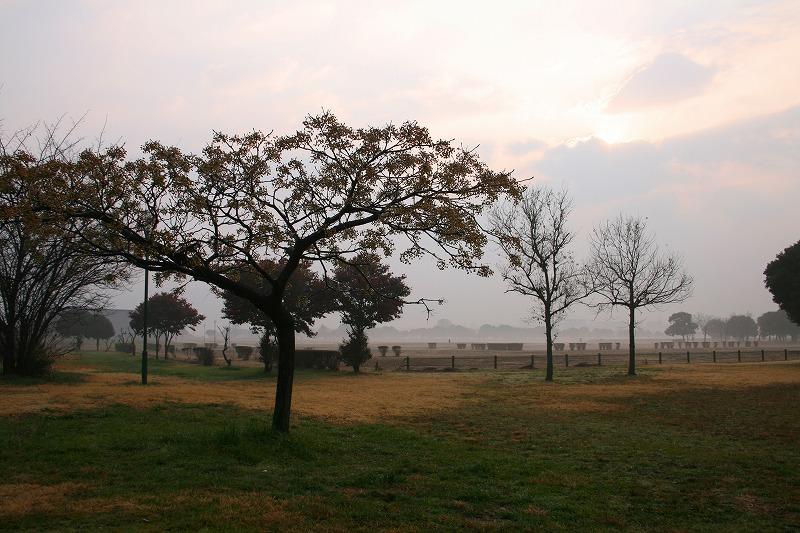 平城宮跡の朝