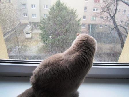 藤子と吹雪1-a
