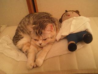 トトの寝相