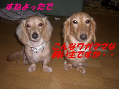20080112173932.jpg