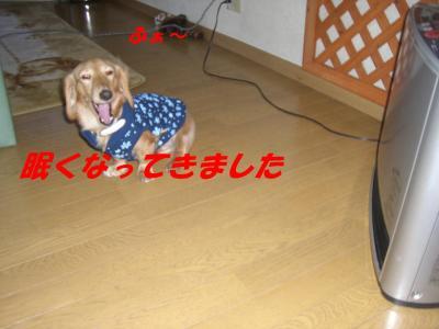 20080131160014.jpg