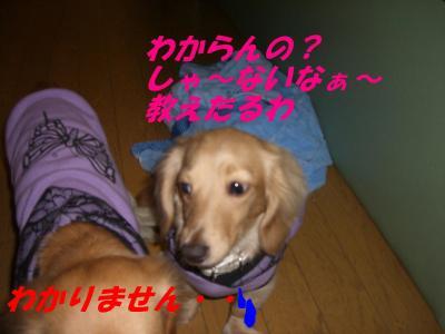20080210135055.jpg
