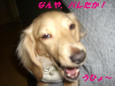 20080225170846.jpg