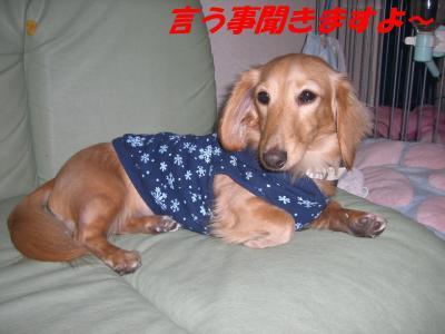 コピー ~ ショコラバニラ81 033
