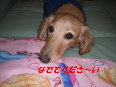 コピー ~ ショコラバニラ81 041
