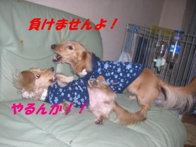 コピー ~ ショコラバニラ81 023