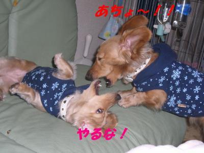 コピー ~ ショコラバニラ81 027