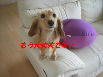 コピー ~ ショコラバニラ新居 011