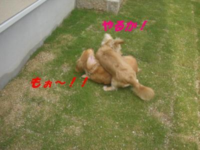 コピー ~ ショコラバニラ新居 031