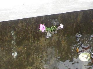 1どぶに咲く花