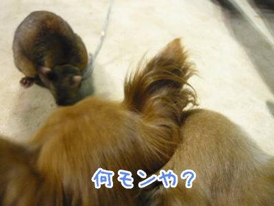 2008-09-01-04.jpg