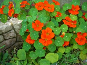garden+001_convert_20090407113339.jpg