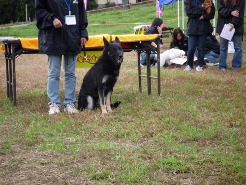 珍犬コーナー1