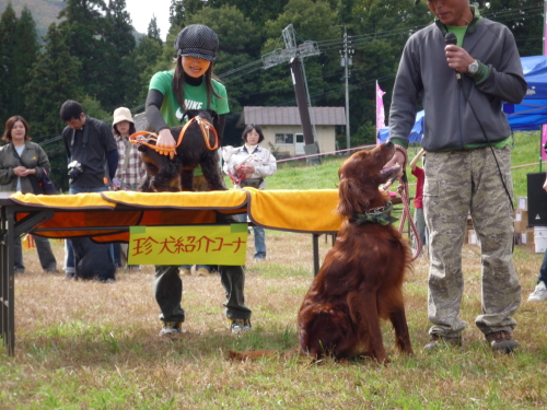 珍犬コーナー2