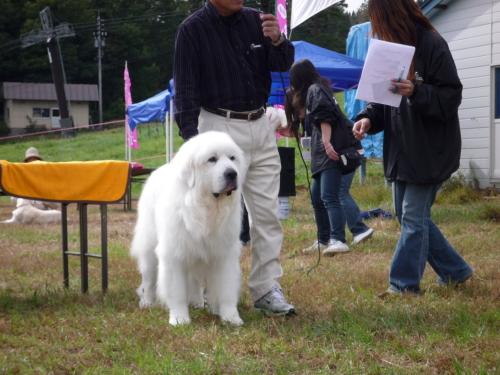 珍犬コーナー3