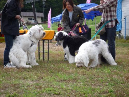珍犬コーナー5