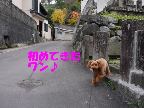 お散歩へGO!