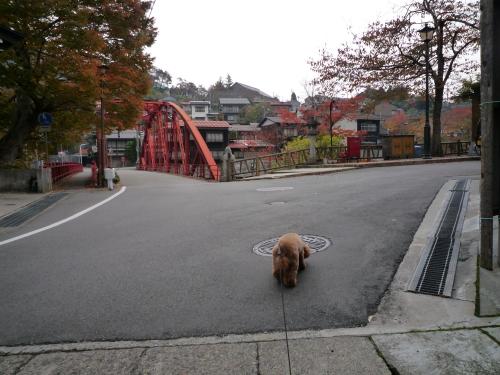 藤波橋付近