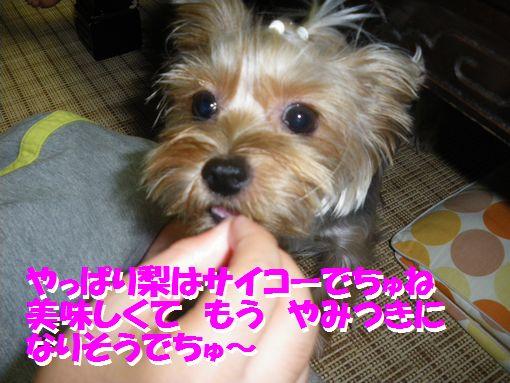 821IMGP1111.jpg