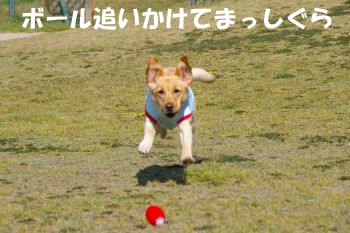 IMGP2740-a.jpg