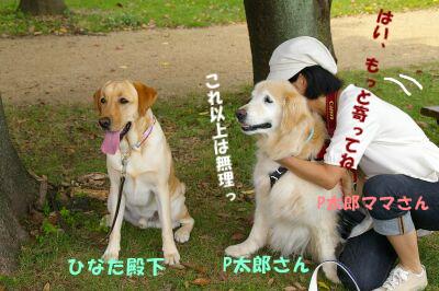 IMGP3846-a.jpg