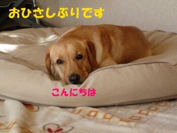 P1000554-a.jpg